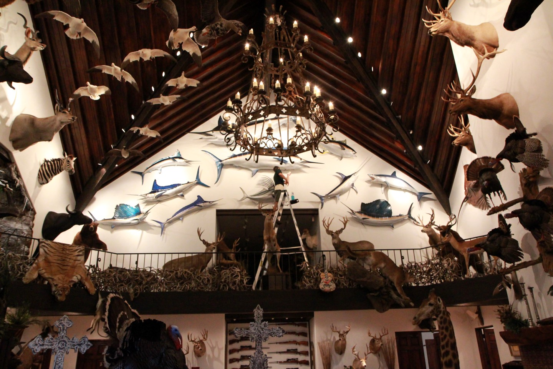 Safari Life Taxidermy Preserving Africa Through Artistry